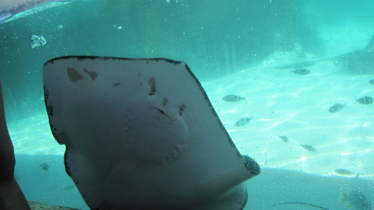Sting ray. I was able to touch it. The skin can be described as smooth as a hard boiled egg. Much like the epidermis of a dolphin, silky and smooth.